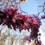 Winter-blooming plants help bees overwinter in your yard