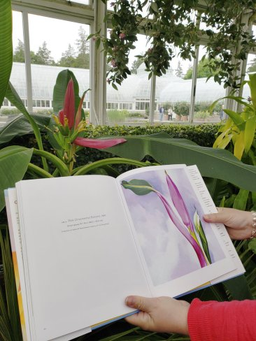 Botanical Garden show highlights O'Keeffe's Hawaii paintings