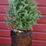 Fall's a great time to plant trees and shrubs