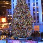 Christmas Tree Trimming Time!