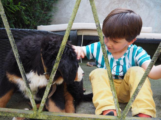 chien et petit garcon-4230759