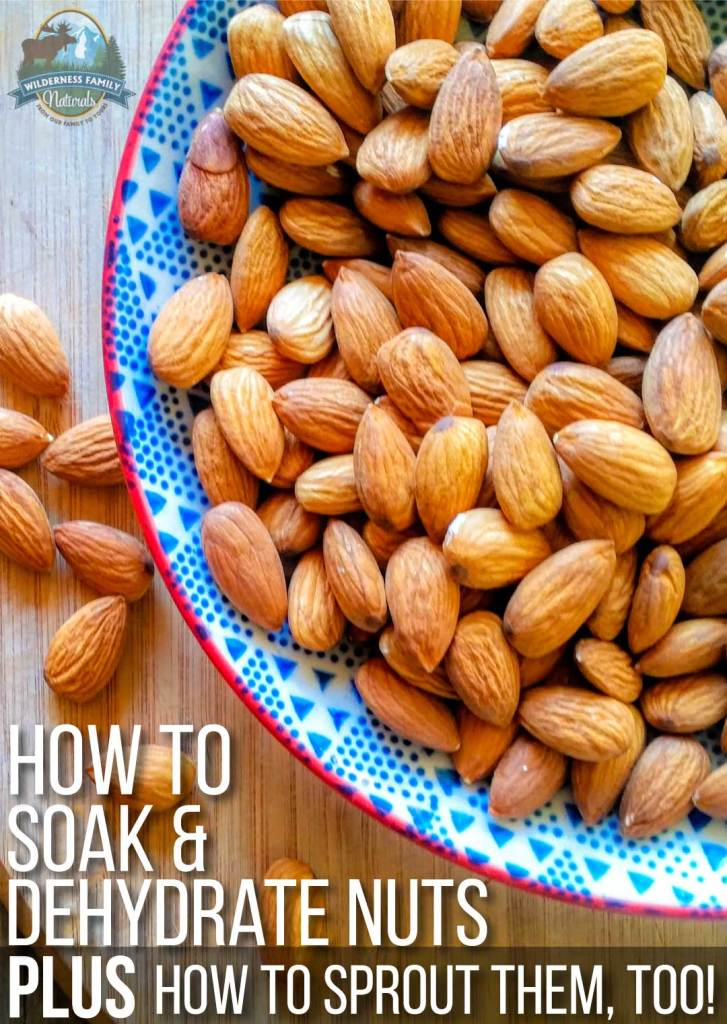 How To Soak & Dehydrate Nuts (plus how to sprout nuts, too!) | Traditional cultures have been soaking nuts in seawater for centuries. Soaking and dehydrating nuts improves nutrient bio-availability and reduces naturally occurring anti-nutrients; sprouting takes it a step further. Here's everything you need to know! | WildernessFamilyNaturals.com
