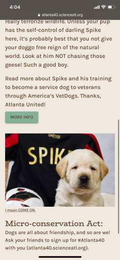 Atlanta United - Spike the Service dog