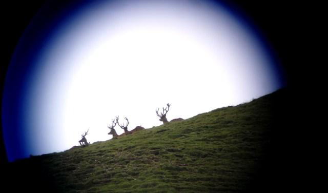 Hirsche Schweizer Nationalpark 2011