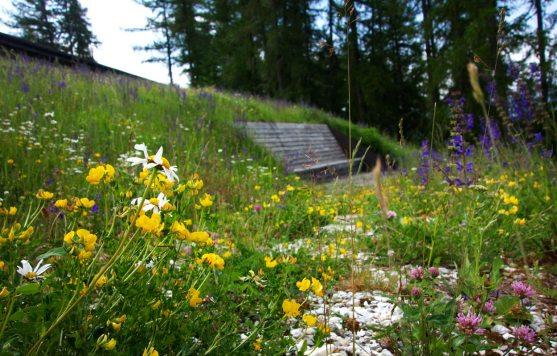 Blumenwiese vor dem Vigilius Mountain Resort