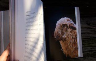 Das kulinarische Erbe der Alpen - Schaf