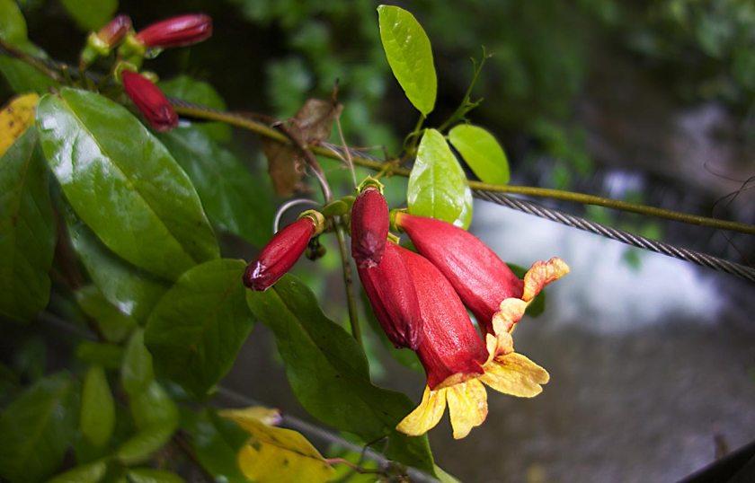 Blüte - Gärten von Schloss Trauttmansdorff