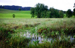 Moore Krumbach - Hochmoor