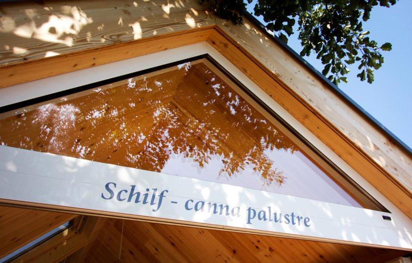 Schilf - Canna Palustre