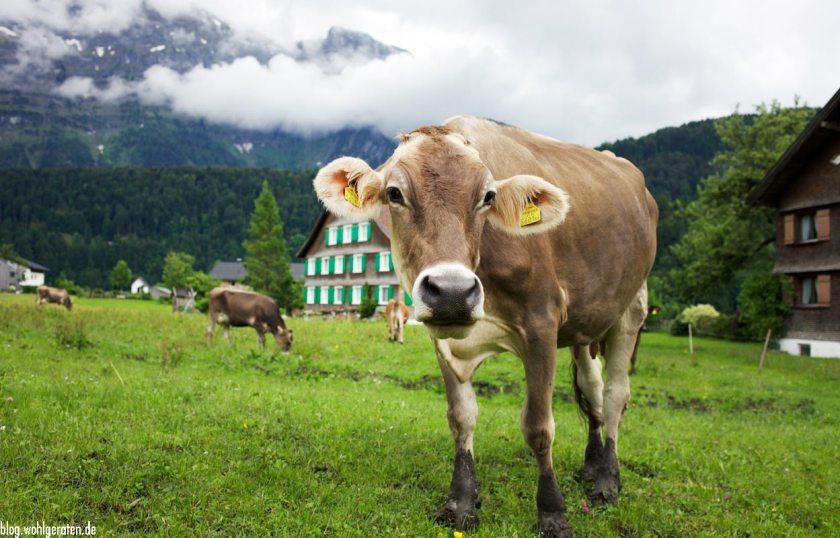 Kuh im Bregenzerwald
