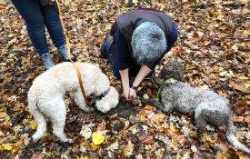 Graz - Trüffelwanderung im Herbstwald