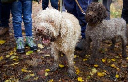 Trüffelhunde Iuma und Camou - Graz