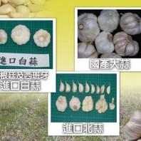 大蒜,蒜頭,台灣算,本土蒜,進口蒜