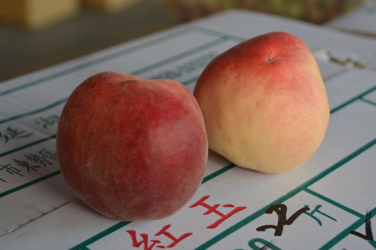 台灣好農 紅玉水蜜桃 產地照