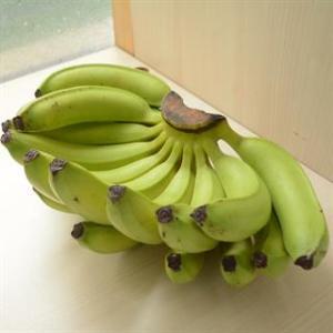 高雄旗山有機轉型期香蕉