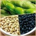 毛豆、黃豆、黑豆(特色圖片)