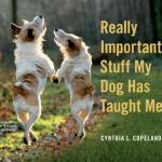 Really Important Stuff Our Dogs Have Taught Us