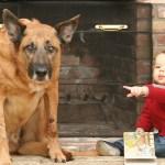 Debunking Pet Behavior Myths