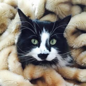 15501-louis_wilson_bad_cat_2017_330_330_70