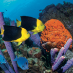 #TravelTuesday: Bonaire National Marine Park