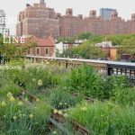 Gardens of the High Line Sweepstakes