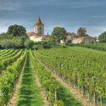 The Grapes of Bordeaux