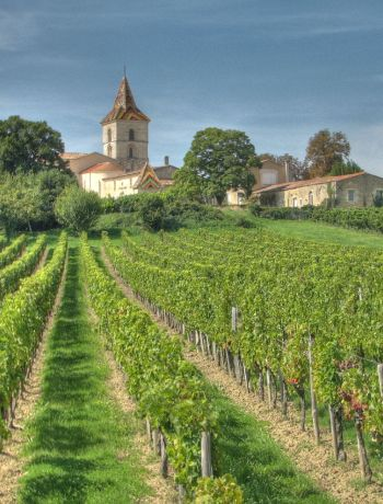 Grapes of Bordeaux
