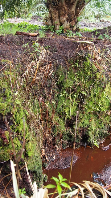 Peat can be many metres thick. Photo: World Agroforestry Centre/Robert Finlayson
