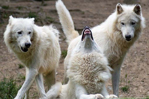 """creating conflict is more that the """"1d4 wolves"""" plot device!"""