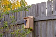 Wild Landscaping: Transform Your Yard Into A Wildlife Sanctuary