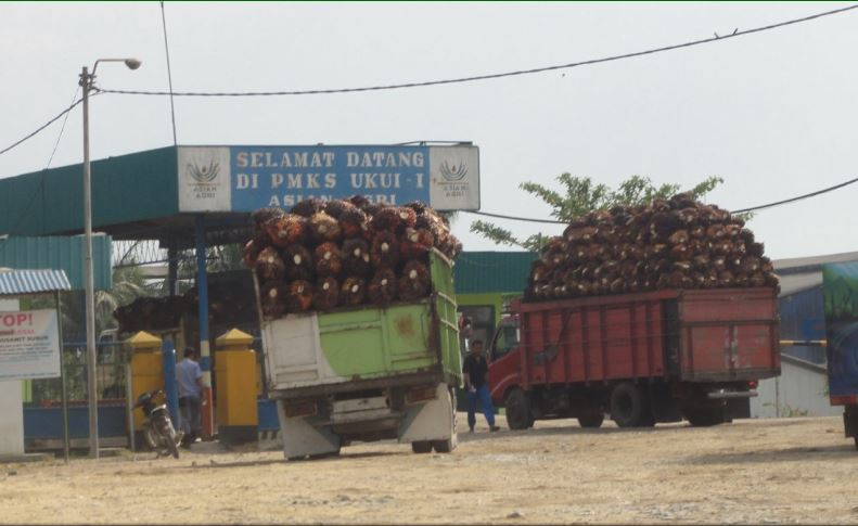 Trucks of FFB, Eyes on Forest Report