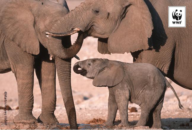 Elephant with logo