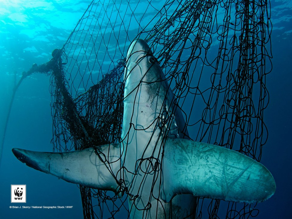 As one of the biggest shark traders in the world, Singapore will have to put in more measures for legal and sustainable trade.