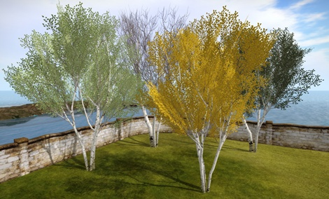 Studio Skye silver birch