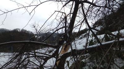 園入口の倒木被害