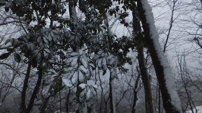 木葉も白のマント