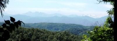 4杉林遠望
