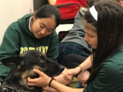 PuppyTherapy_09May2018-5455