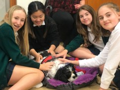 PuppyTherapy_09May2018-5457