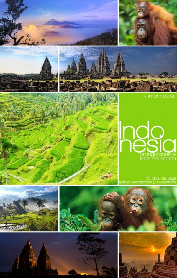 Indonesia, orangutanes e Islas de Sonda