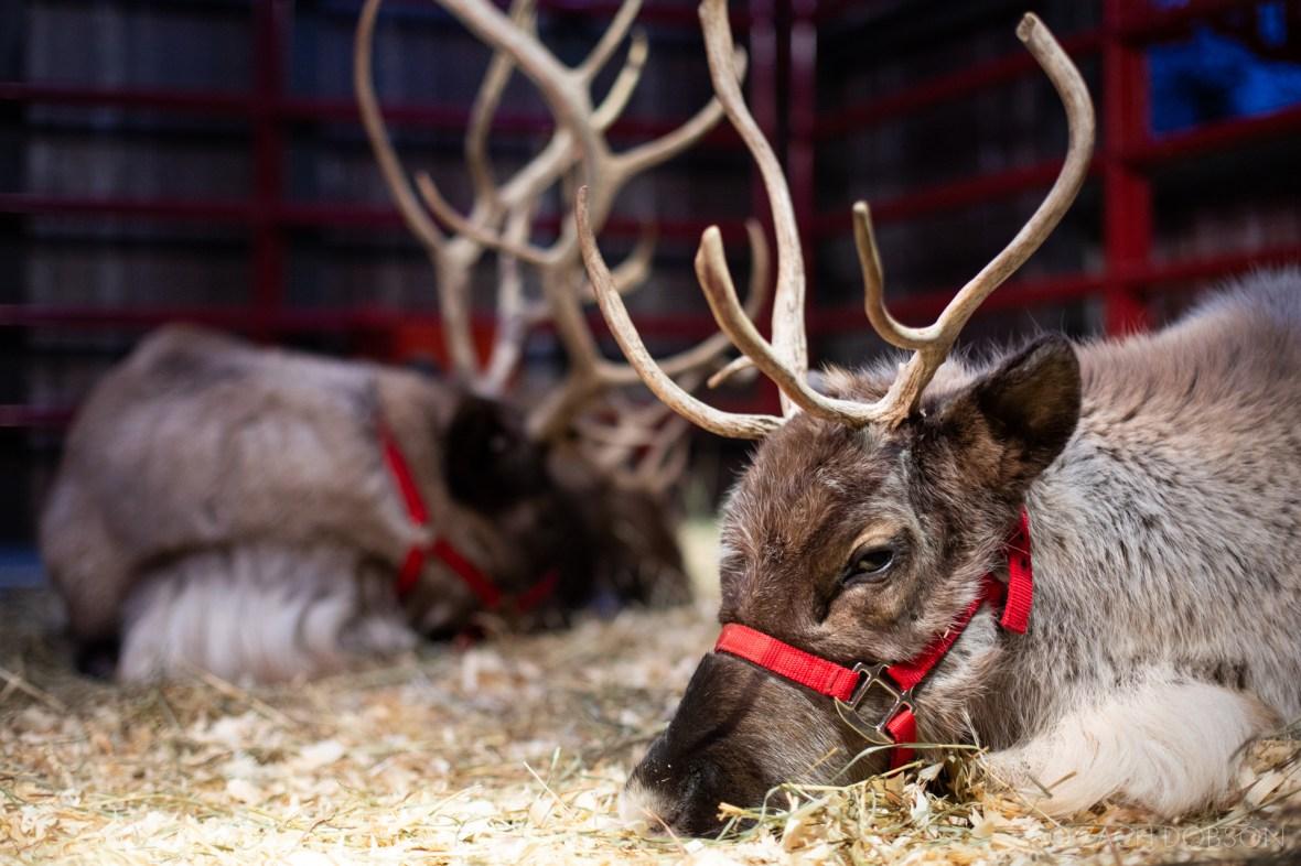 christmas-at-the-zoo-indianapolis