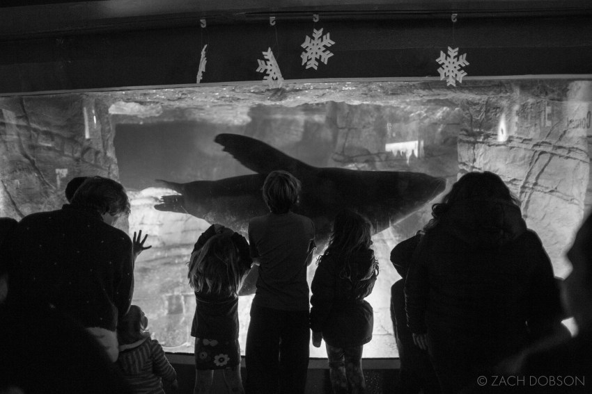 Christmas at the Zoo in Indianapolis, Indiana. Sea lion exhibit.