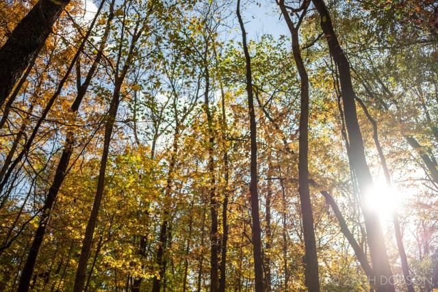 Ritchey Woods Nature Preserve