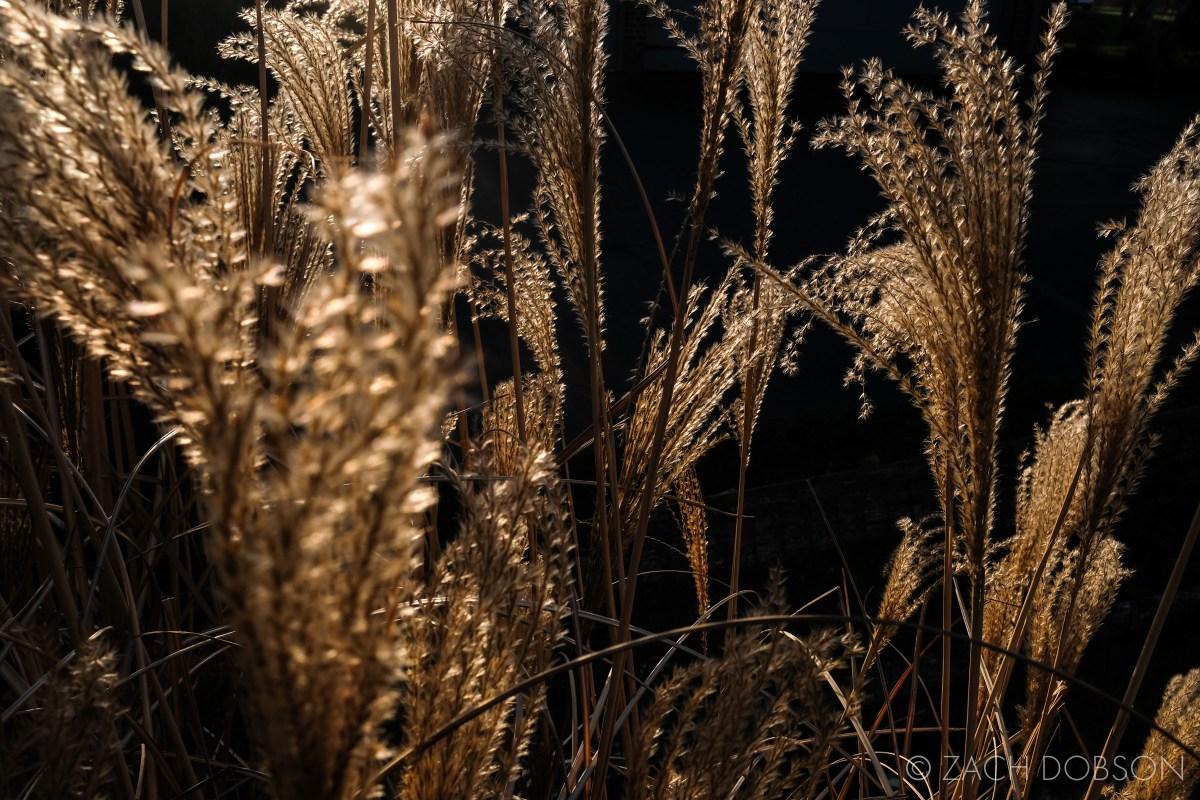 tall grass in the sun