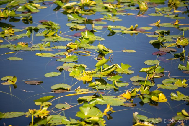 anhinga trail everglades national park