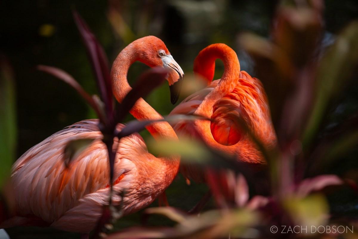wonder gardens bonita springs flamingos