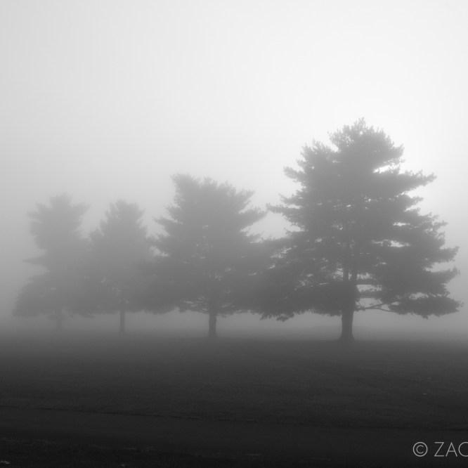 fog trees nature