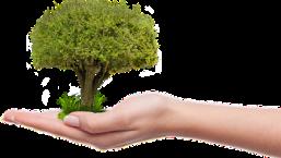 tree-zamzar-small