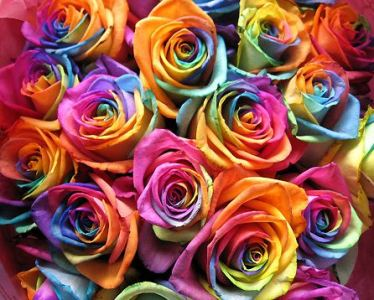 How to Create Rainbow Flowers   zFlowers com Blog How to Create Rainbow Flowers