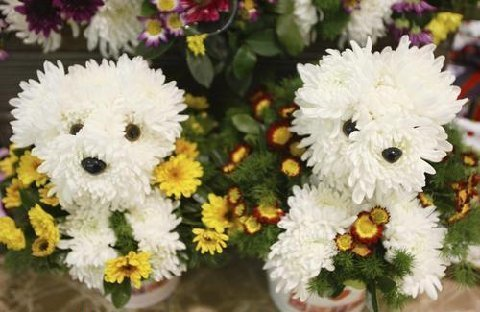 Funny Flower Collection: Flowers and Dogs